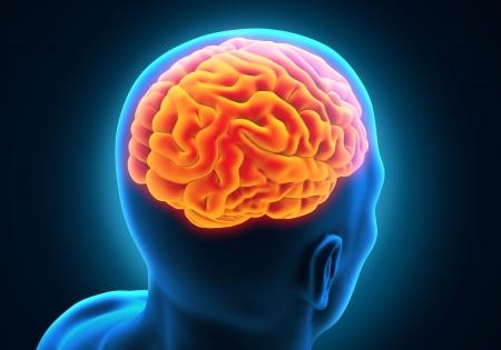 bone cancer: Human Brain Anatomy