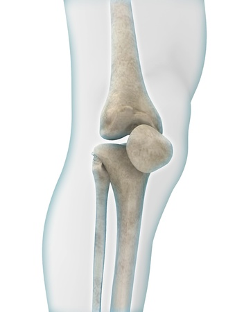 bones of the foot: Knee Anatomy