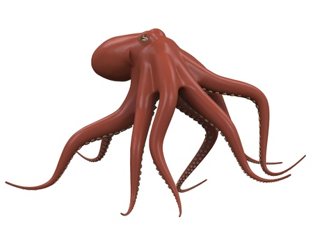 squid: Octopus Isolated