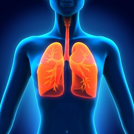 Vrouwelijke anatomie van menselijke ademhalingsstelsel