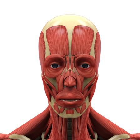 Menselijk gezicht Anatomie