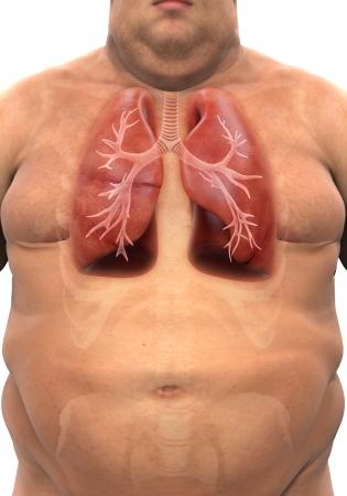 alveolos pulmonares: Sistema respiratorio del cuerpo con sobrepeso