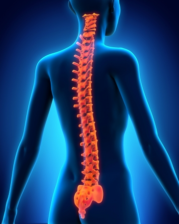 spinal cord: Human Spine Anatomy
