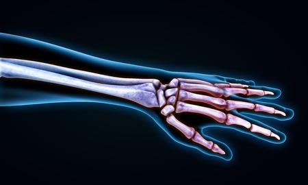 huesos humanos: Mano humana Anatomy Illustration Foto de archivo