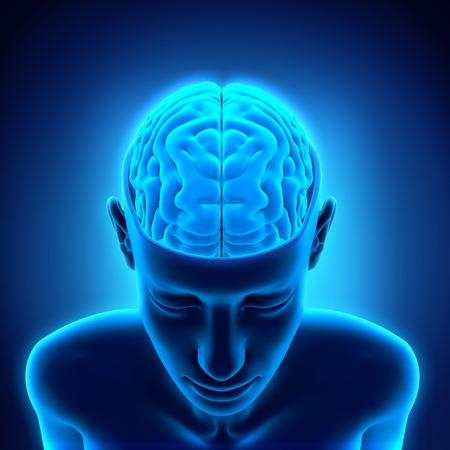 인간 두뇌의 해부학 스톡 콘텐츠