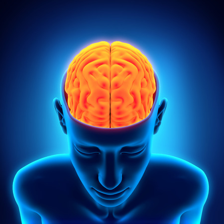hemisphere: Human Brain Anatomy