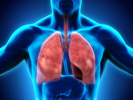 tuberculosis: Human Respiratory System Stock Photo