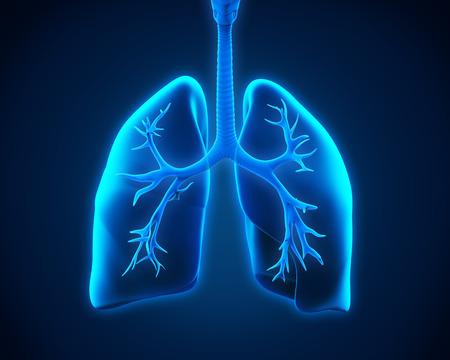 asma: Pulmón y bronquios