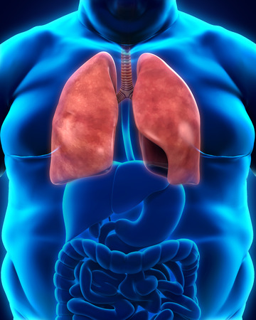 body fat: Respiratory System of Overweight Body Stock Photo