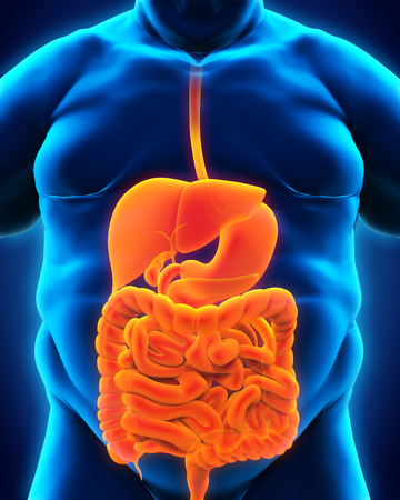 Digestive System of Overweight Body Stock Photo - 28357623