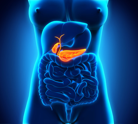 gallbladder: Human Gallbladder and Pancreas Anatomy