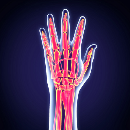 x ray image: Human Hand Anatomy Illustration Stock Photo