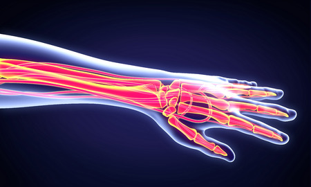 painful: Human Hand Anatomy Illustration Stock Photo