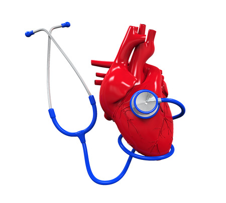 cardiovascular disease: Human Heart and Stethoscope Stock Photo