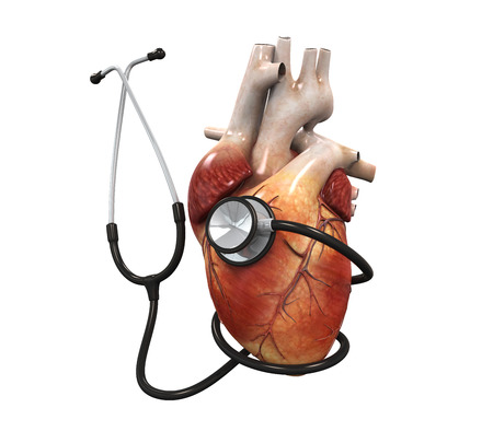 frontal: Human Heart and Stethoscope Stock Photo