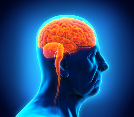 advance: Elderly Male Brain Anatomy