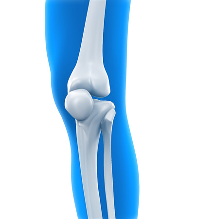 Human Knee Anatomy photo