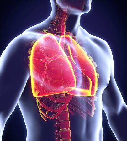 illness: Human Respiratory System Stock Photo