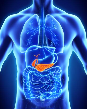 persona enferma: La ves�cula biliar y p�ncreas Anatom�a Humana Foto de archivo