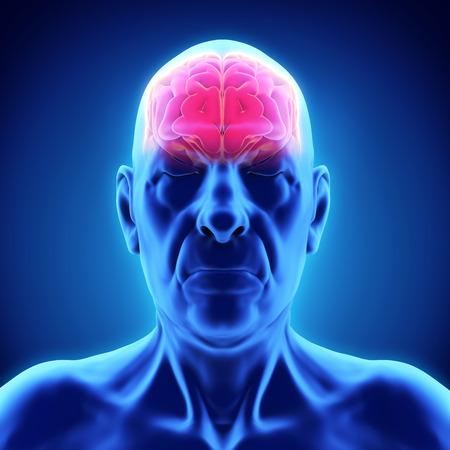 cuerpo hombre: Ancianos Anatom�a Cerebro masculino