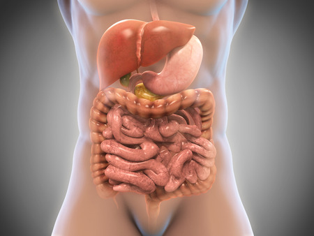 nude male body: Human Digestive System