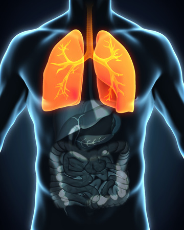 systems: Human Respiratory System Stock Photo