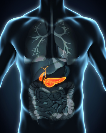 cuerpo hombre: La vesícula biliar y páncreas Anatomía Humana Foto de archivo