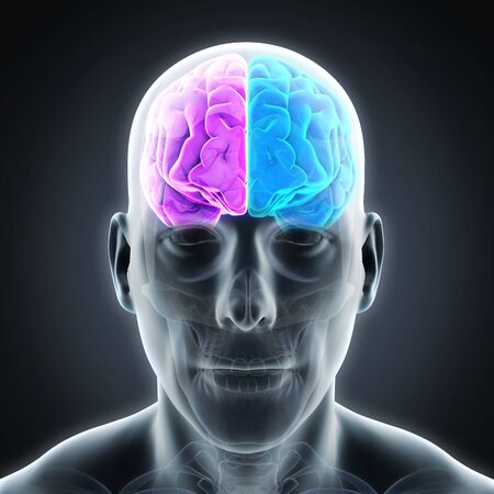 nerveux: Gauche et droite du cerveau humain Banque d'images