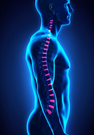 muscle training: Backbone Bandscheibe Anatomie Lizenzfreie Bilder