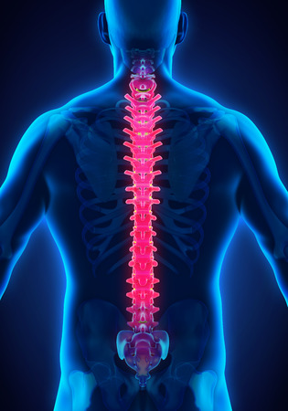 the horror of spinal injuries in humans