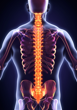 painful: Human Male Spine Anatomy Stock Photo