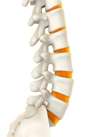 herniated: Human Spine Anatomy