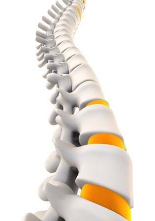 Anatomie Colonne vertébrale humaine Banque d'images - 51650514