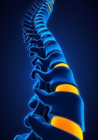 columna vertebral: Anatomía Columna vertebral humana Foto de archivo