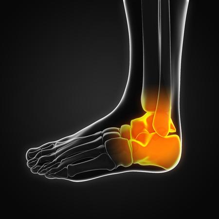calcaneus: Painful Ankle Illustration Stock Photo