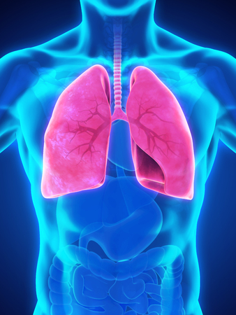 inhale: Human Respiratory System Stock Photo