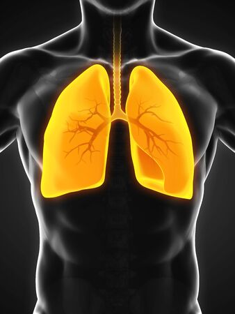 emphysema: Human Respiratory System Stock Photo