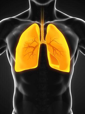 chronic bronchitis: Human Respiratory System Stock Photo