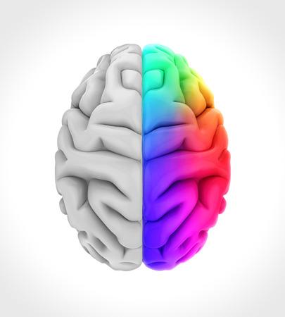 왼쪽과 오른쪽 인간 두뇌 스톡 콘텐츠