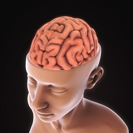 head injury: Human Brain Anatomy