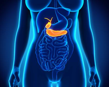 pancreatic: Human Gallbladder and Pancreas Anatomy