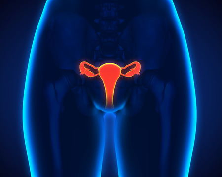 fimbriae: Female Reproductive System