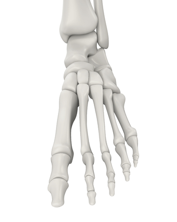 Foot Bones Anatomy Isolated Stock Photo, Picture And Royalty Free ...