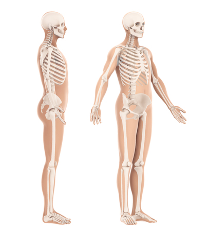 Human Body Amd Skeleton Anatomy Isolated Stock Photo, Picture And ...