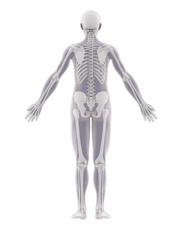 Anatomía del esqueleto humano aislada Foto de archivo - 88973028