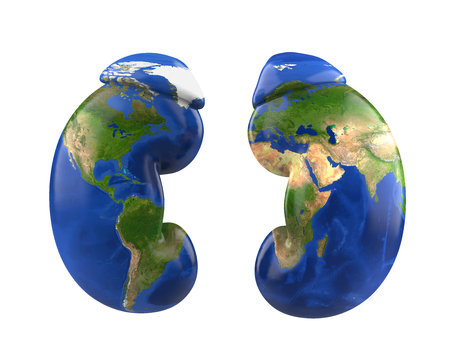 Human Kidneys with World Map. World Kidney Day Concept