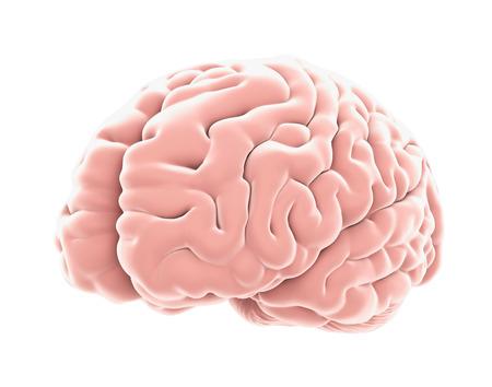 Human Brain Anatomy Isolated