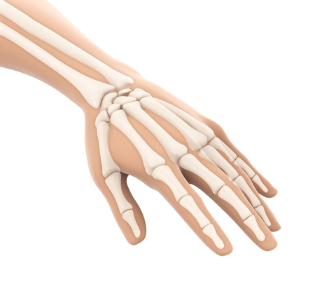 Human Hand Anatomy Illustration Stock Photo