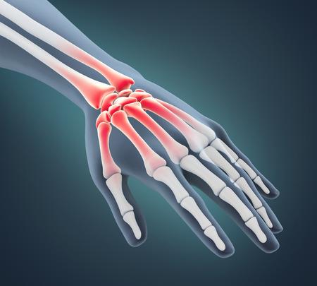 Human Hand Anatomy Illustration Stock fotó