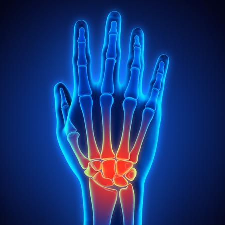 Human Hand Anatomy Illustration Zdjęcie Seryjne